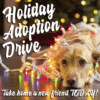 Customize Your Own Christmas Banners - Dog Adoption Template - Custom Graphix