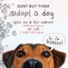 Non-profit Banner - Adopt-a-dog - Custom Graphix